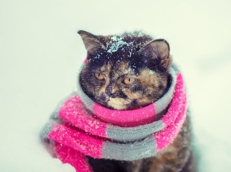 Retrato de un pequeño gatito que lleva la bufanda hecha punto foto de archivo libre de regalías