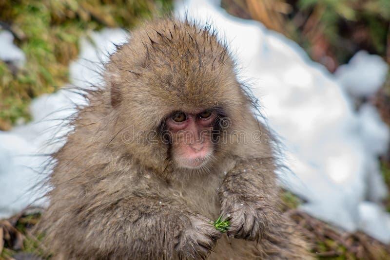 Retrato de un pequeño mono foto de archivo libre de regalías