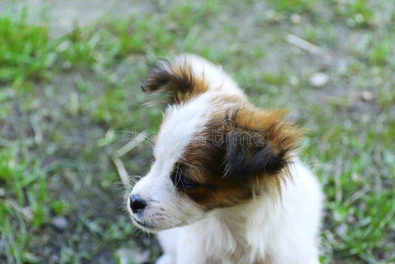 Retrato de un pequeño primer del perrito en un fondo de gras verdes foto de archivo