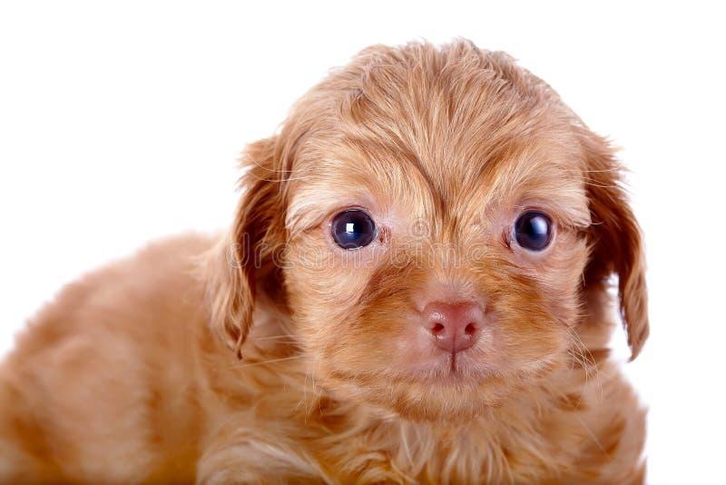 Retrato de un perrito fotos de archivo libres de regalías