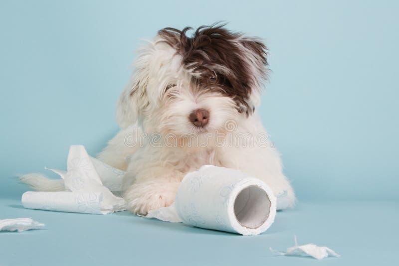 Retrato de un perrito del nacido en el baby-boom con el papel higiénico foto de archivo