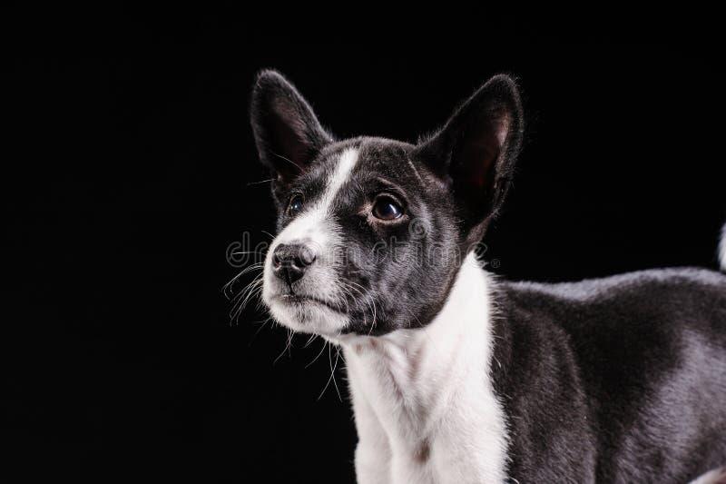 Retrato de un perro bonito en un fondo negro foto de archivo