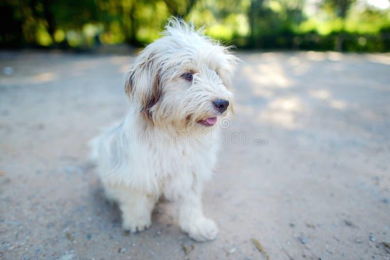Retrato de un perro mestizo en el verano imagenes de archivo