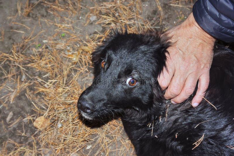 retrato de un perro negro con los ojos culpables fotos de archivo