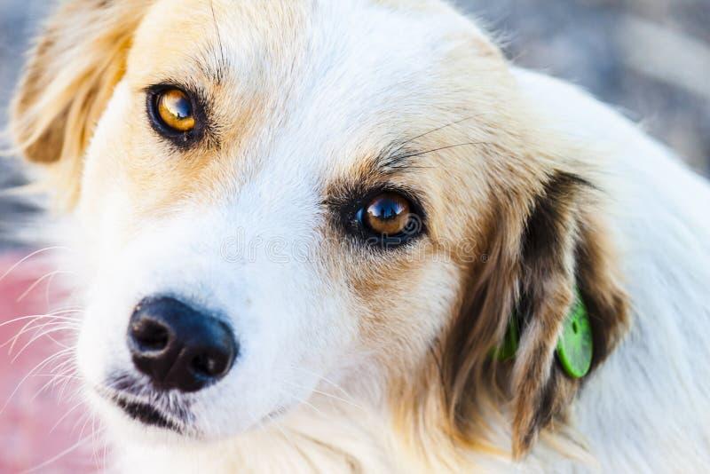 Download Retrato De Un Perro Perdido Precioso Foto de archivo - Imagen de retrato, parásito: 100529228