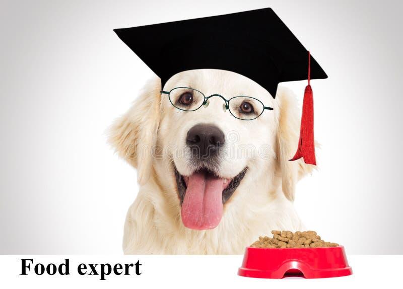 Retrato de un perro sabio foto de archivo