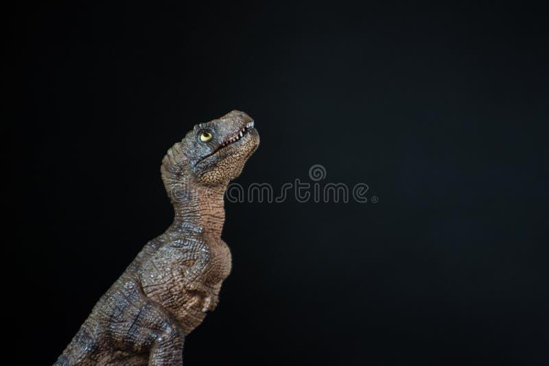 Retrato de un rex del tiranosaurio del bebé en fondo negro imagen de archivo