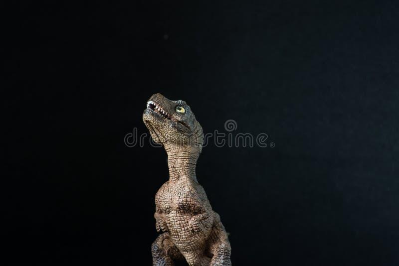 Retrato de un rex del tiranosaurio del bebé en fondo negro imagen de archivo libre de regalías