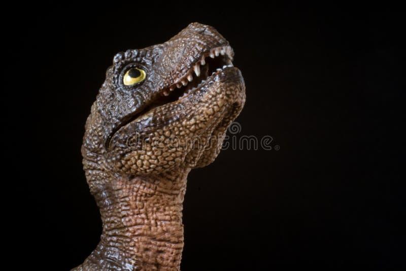 Retrato de un rex del tiranosaurio del bebé en fondo negro fotos de archivo libres de regalías