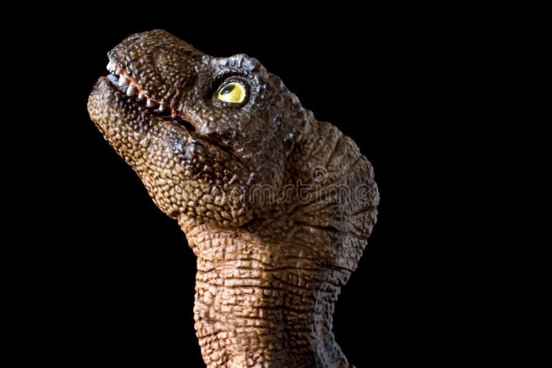 Retrato de un rex del tiranosaurio del bebé en fondo negro foto de archivo