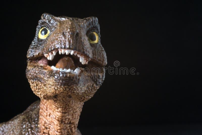Retrato de un rex del tiranosaurio del bebé en fondo negro fotos de archivo