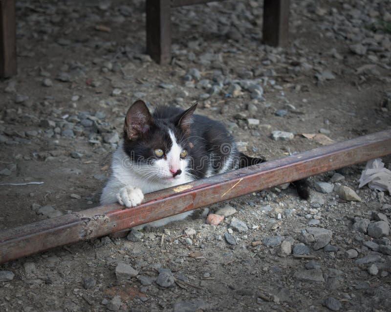 Retrato de una mirada que se sienta linda del gato negro lejos cambiantemente fotografía de archivo libre de regalías