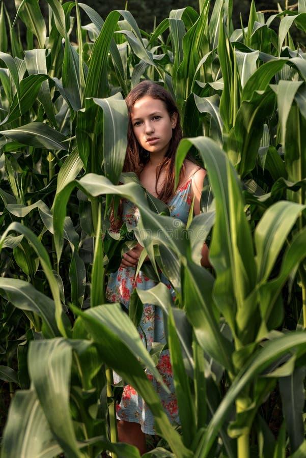 Retrato de una muchacha morena entre plantas de maíz altas en un campo rural en una luz melancólica de la puesta del sol imagen de archivo