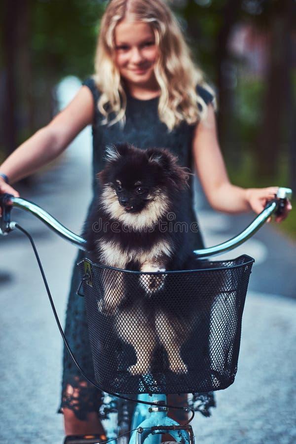 Retrato de una pequeña muchacha rubia en una ropa informal, perro lindo del perro de Pomerania de los controles Paseo en una bici imagen de archivo