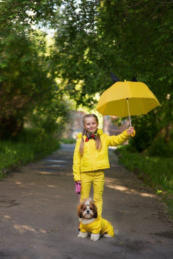 Retrato de una pequeña muchacha sonriente con dos perros en ropa amarilla Muchacha con los perros de Shi Tzu imagenes de archivo