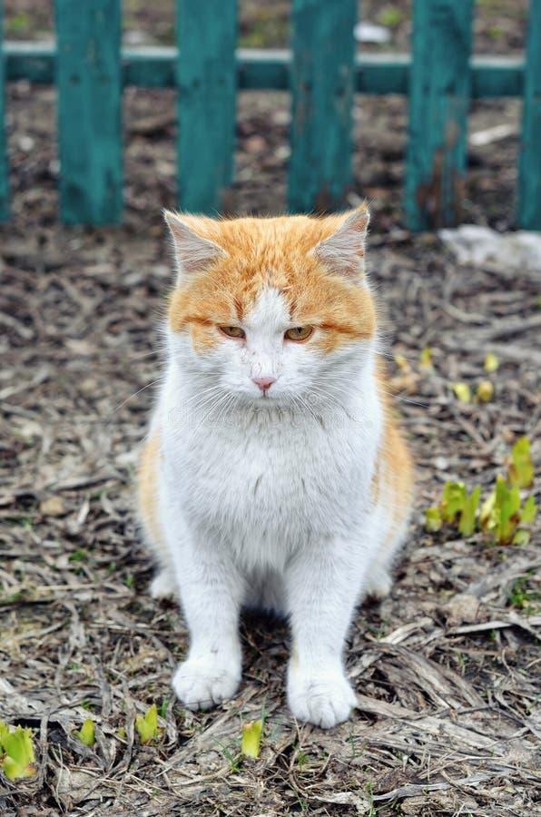 Retrato de una primavera triste de la foto del gato imagen de archivo libre de regalías