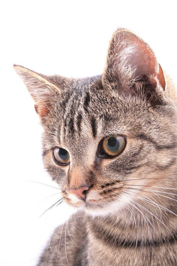 Retrato del animal doméstico fotos de archivo