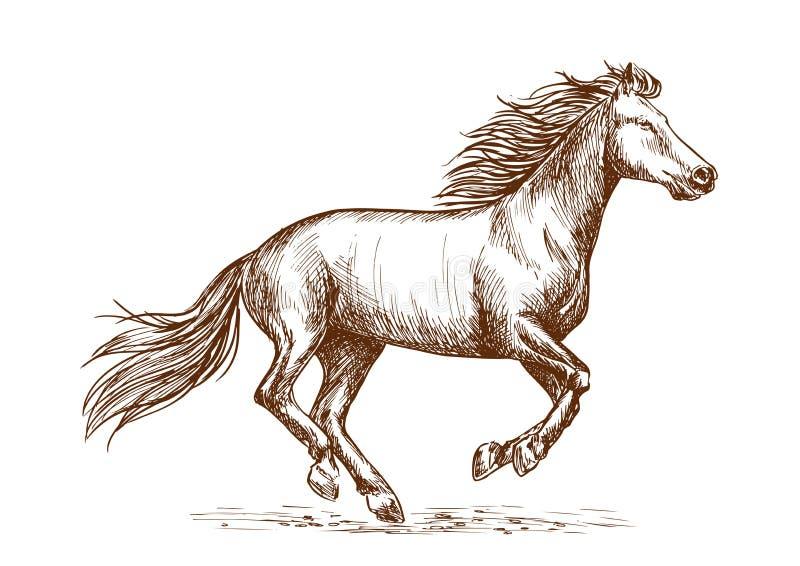 Retrato del bosquejo del galope del funcionamiento del caballo blanco ilustración del vector