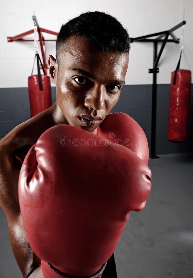 Retrato del boxeo imagen de archivo