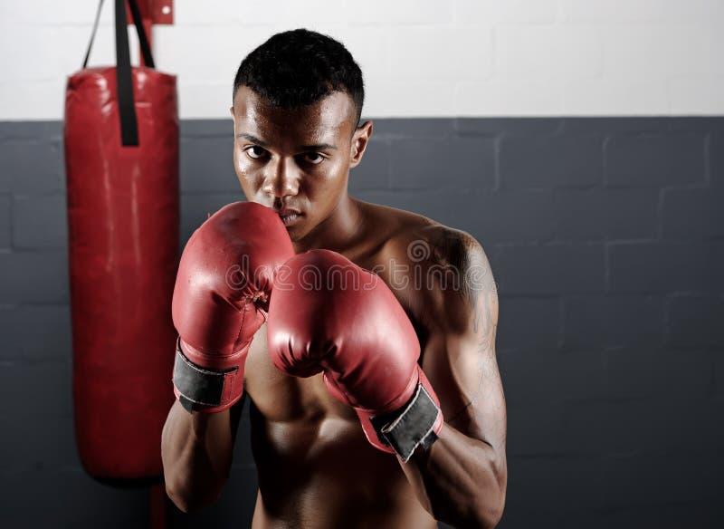 Retrato del boxeo fotos de archivo