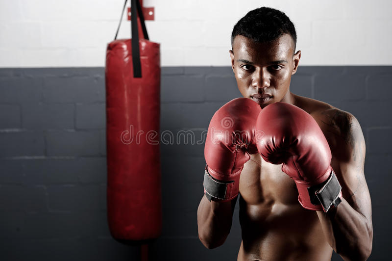 Retrato del boxeo foto de archivo
