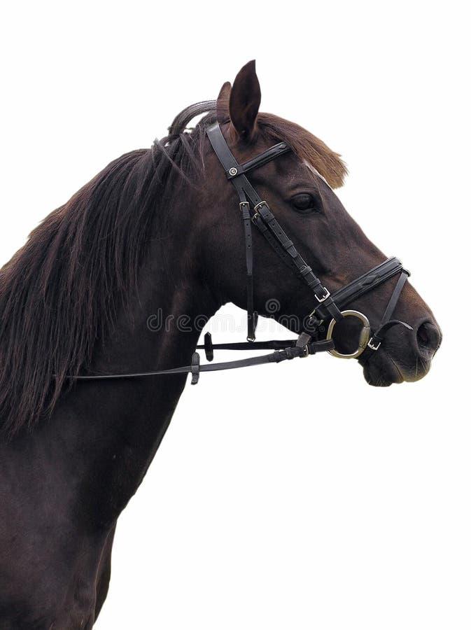 Download Retrato del caballo foto de archivo. Imagen de mamífero - 176588
