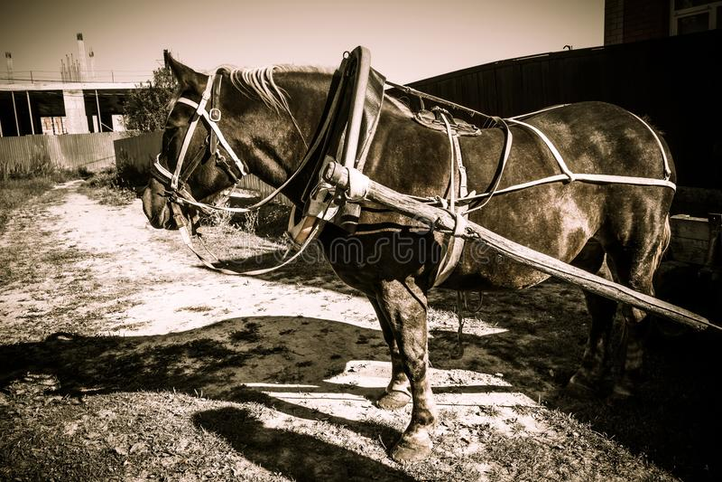 Retrato del caballo aprovechado retro fotografía de archivo
