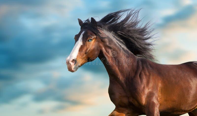 Retrato del caballo de bahía con la melena larga imagen de archivo