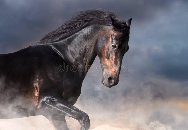 Retrato del caballo de bah?a imagen de archivo libre de regalías