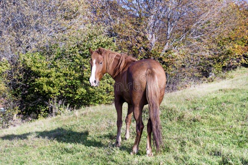 Retrato del caballo rojo en la montaña del otoño imagenes de archivo