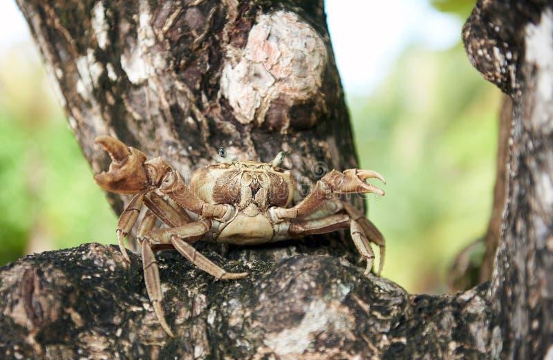 Retrato del cangrejo de la vida foto de archivo libre de regalías