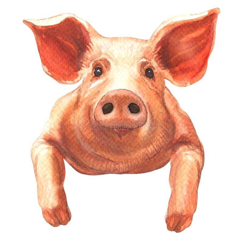 Retrato del cerdo adorable aislado, animal del campo lindo, ejemplo exhausto de la acuarela de la mano en blanco libre illustration