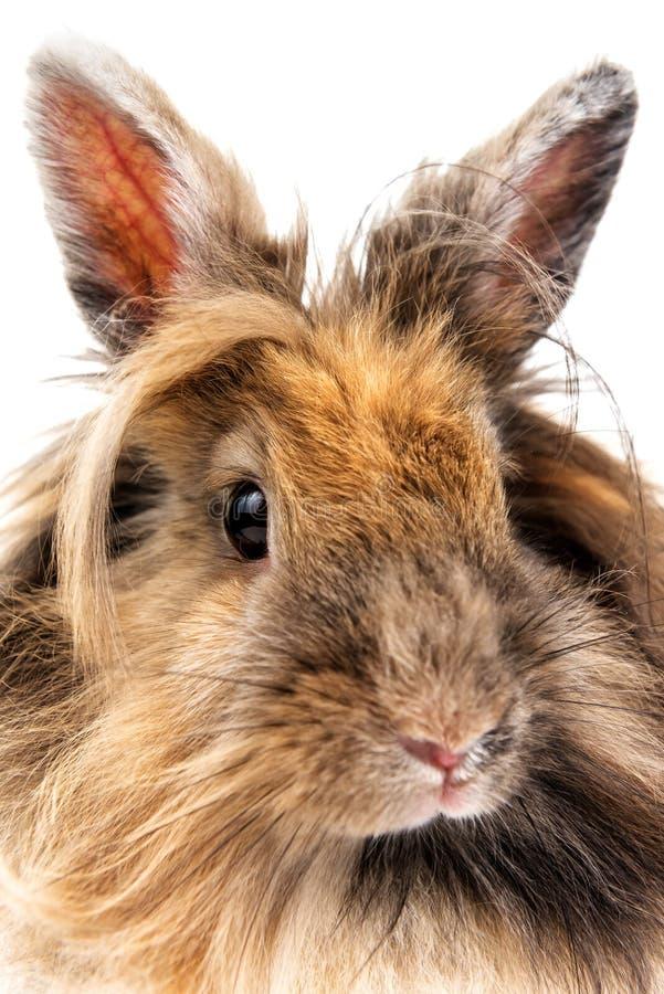 Retrato del conejo lindo vivo en blanco imagen de archivo
