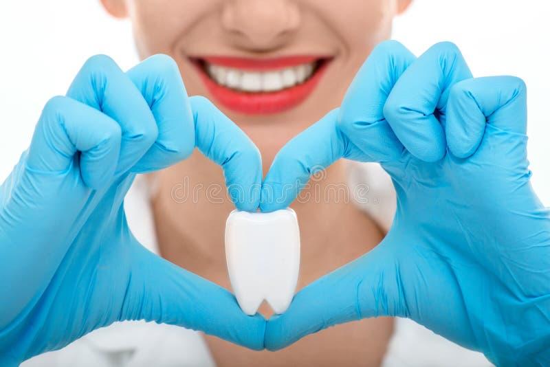 Retrato del dentista con el diente en el fondo blanco fotos de archivo