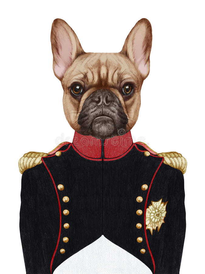 Retrato del dogo francés en uniforme militar stock de ilustración