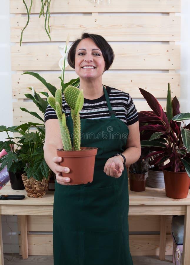 Retrato del florista de la mujer con el cactus en delantal y la herramienta en floristería imagenes de archivo