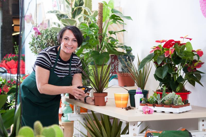 Retrato del florista de la mujer en delantal y de la herramienta en floristería fotografía de archivo