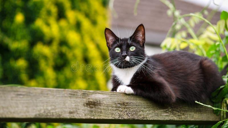 Retrato del gato blanco y negro que se sienta en la pérgola del jardín foto de archivo