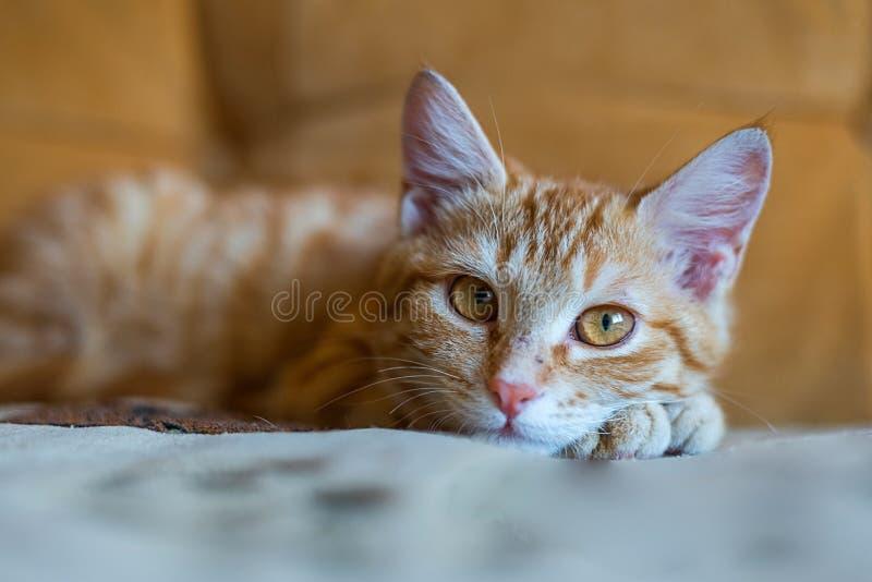 Retrato del gato del jengibre que miente en el sofá anaranjado imagen de archivo libre de regalías