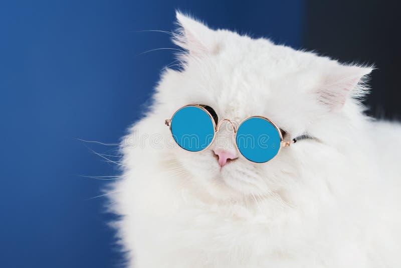Retrato del gato mullido blanco en gafas de sol de la moda Foto del estudio El gatito nacional lujoso en vidrios presenta en azul foto de archivo libre de regalías
