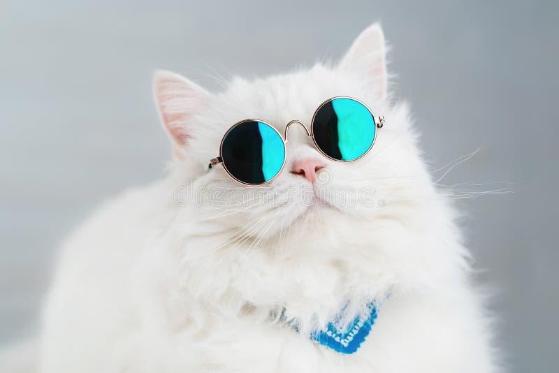 Retrato del gato mullido recto de la montaña con el pelo largo y las gafas de sol redondas Moda, estilo, concepto animal fresco foto de archivo libre de regalías