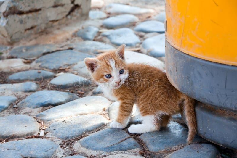 Retrato del gato, un cierre encima de la visión foto de archivo