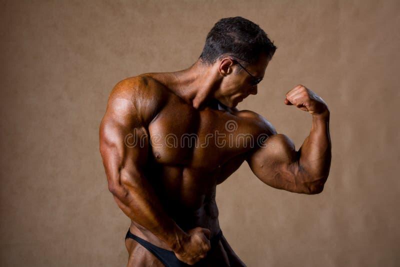 Retrato del hombre atractivo del músculo que presenta en estudio. imágenes de archivo libres de regalías