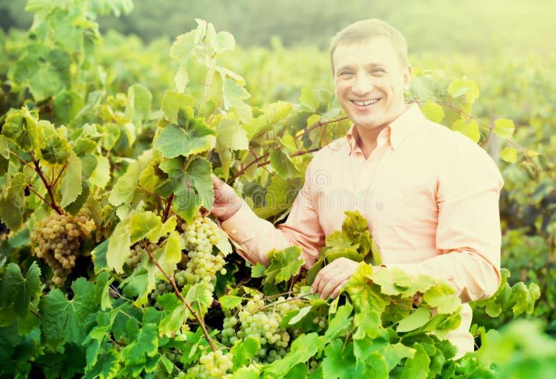 Retrato del hombre sonriente cerca de las uvas en viñedo fotos de archivo libres de regalías