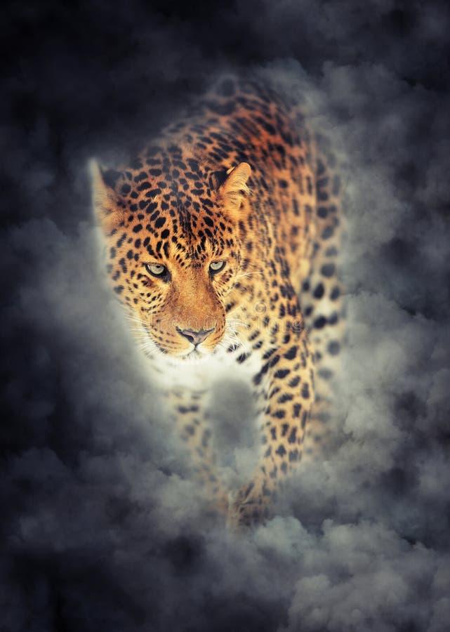Retrato del leopardo en humo en fondo oscuro fotos de archivo