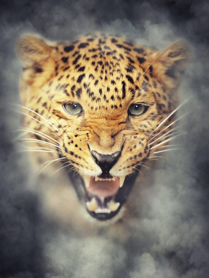 Retrato del leopardo en humo en fondo oscuro imagenes de archivo