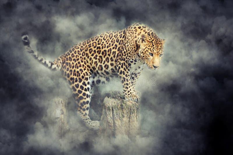 Retrato del leopardo en humo en fondo oscuro foto de archivo
