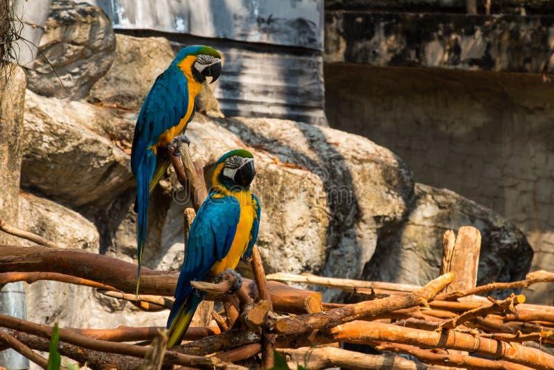 Retrato del loro colorido del Macaw del escarlata contra fondo de la selva fotografía de archivo