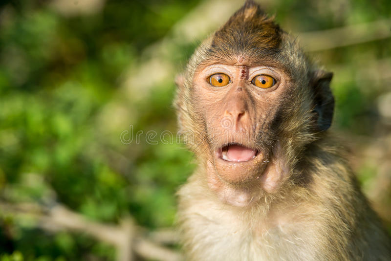 Retrato del mono en el salvaje imagen de archivo