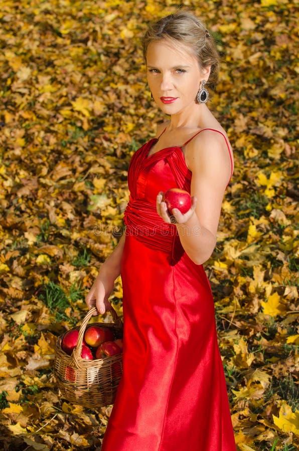 Retrato del otoño de la mujer bonita joven con la cesta de manzanas foto de archivo